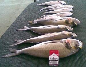 pesca-allorata-dalle-saline-di-palinuro